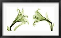 Framed Lilies [Positive]