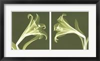 Framed Lilies [Negative]