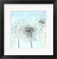Framed Dandelion I