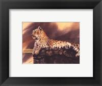 Lounging Leopard Framed Print
