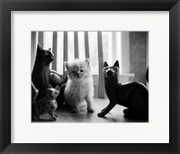 Framed Ragdoll Kitten