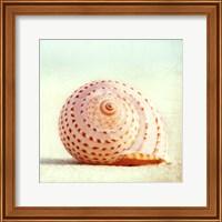 Framed Seashell Voices