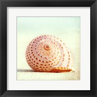 Framed Seashell Voices