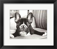 Framed Hugo