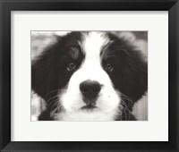 Framed Ben