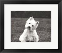 Framed Winnie