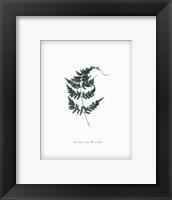 Framed Leaf XIV