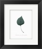 Framed Leaf XV