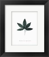 Framed Leaf XVI