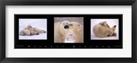 Framed Nature's Kingdom-Polar Bears