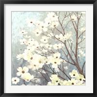 Framed Dogwood Blossoms I