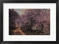 Framed Blossom Bordered