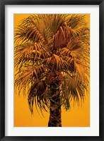 Framed La Jolla