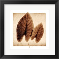 Framed Taro Leaves