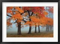 Framed Burst of Colors