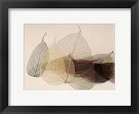 Framed Chablis