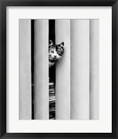 Framed Chat Curieux
