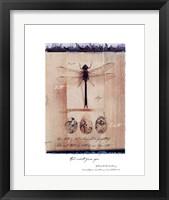 Framed Dragon Fly