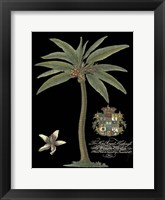 Framed Palm on Black I