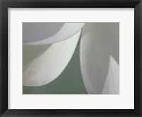 Lotus Detail I Framed Print