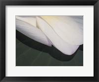 Framed Lotus Detail II