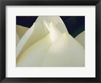 Framed Lotus Detail III