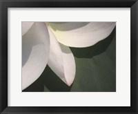 Framed Lotus Detail IV