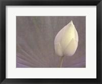 Framed Lotus Detail VI