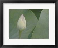 Lotus Detail VII Framed Print