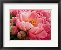 Framed Coral Peonies I