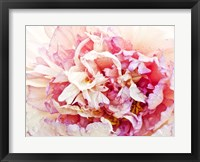 Framed Monet's Peony I