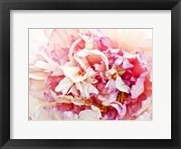 Monet's Peony I Framed Print