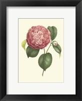 Framed Camellia Blooms I