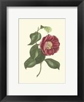 Framed Camellia Blooms II