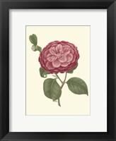 Framed Camellia Blooms IV