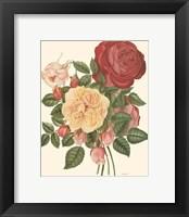 Framed Vintage Roses I
