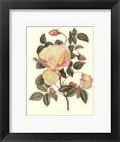Framed Vintage Roses IV