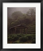 Framed Rejuvenate - Tea Plantation