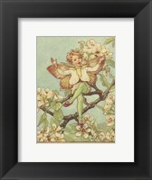 Framed Pear Blossom Fairy