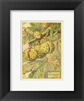 Framed Horse Chestnut Fairy