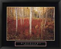 Framed Discovery - Aspen Trees