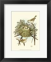 Framed Prairie Warbler & Nest