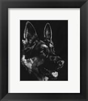 Framed Canine Scratchboard I