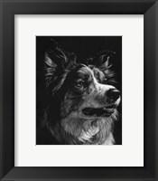 Framed Canine Scratchboard IV