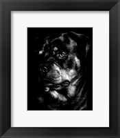 Framed Canine Scratchboard XII