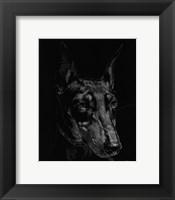 Framed Canine Scratchboard XIII