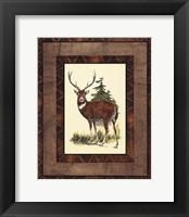 Framed Rustic Deer