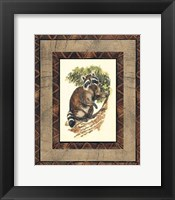 Framed Rustic Raccoon
