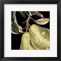 Framed Dramatic Pear