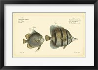 Framed Antique Fish III
